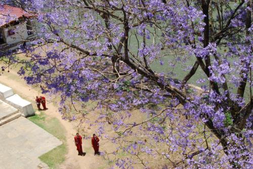 Bhutan đẹp nhất vào tháng 4,5 vì nền nhiệt trung bình mát mẻ, thích hợp để vui chơi, tổ chức các hoạt động ngoài trời. Khung cảnh Bhutan vào mùa xuân xinh đẹp, để lại ấn tượng cho du khách với hàng phượng tím nở rộ. Đặc biệt, bạn có thể ngỡ ngàng khi ngắm nhìn cung điện Punakha 6 tầng lầu được bao phủ bởi màu trắng muốt bởi hàng cây trồng bên dòng sông xanh thơ mộng.