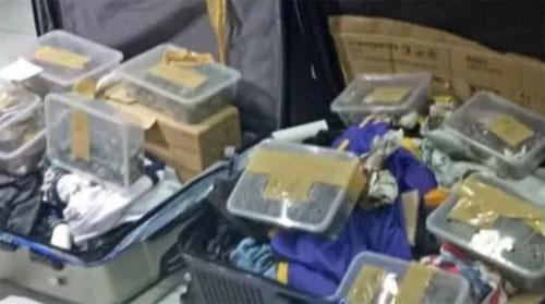 Khách đi máy bay giấu 1.500 con rùa trong vali - ảnh 1