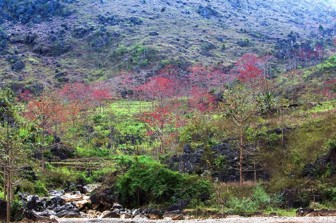 Hoa gạo đỏ rực bên bờ sông Nho Quế