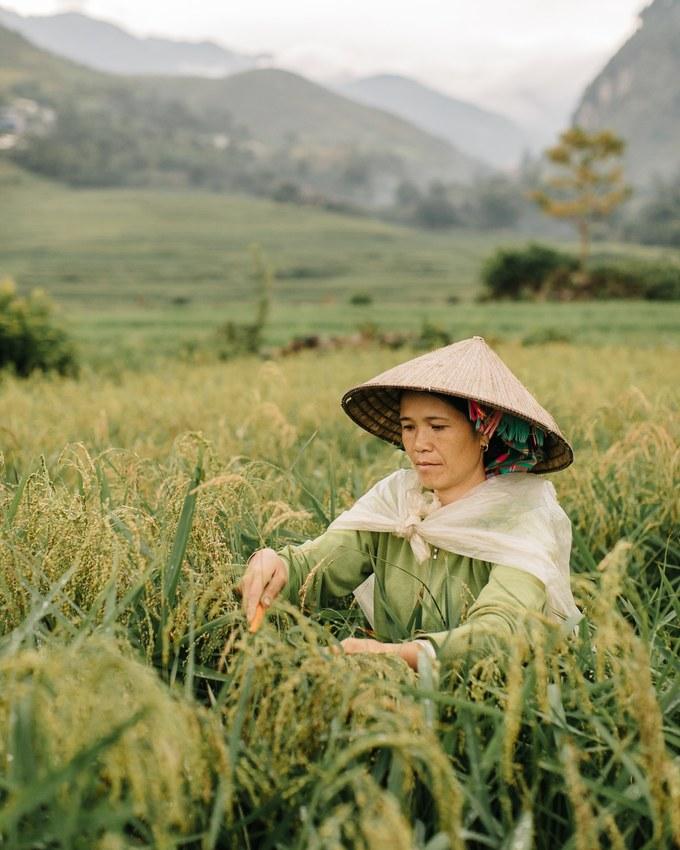 Life in northern Vietnam through lenses of Belgian travel