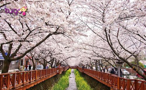 Đến đây vào mùa xuân, bạn sẽ được tận hưởng không khí trong lành cùng khí trời se lạnh nhưng vẫn không kém phần ấm áp.