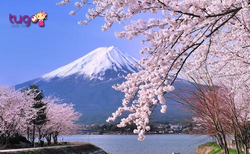 Hình ảnh núi Phú Sĩ quanh năm tuyết phủ trắng xóa là một trong những biểu tượng bất biến của đất nước Nhật Bản