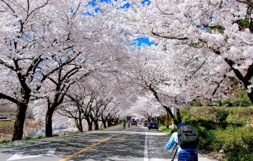 1. Lễ hội mùa xuân Yayoi  Để bắt đầu chuyến đi của mình, du khách có thể tham gia cùng với người dân bản địa tham gia lễ hội Yayoi (弥生祭). Lễ hội được tổ chức từ 13/4-17/4 hằng năm. 11 chiếc xe hoa (hana-yatai) được trang trí bằng các loại hoa mùa xuân với màu sắc lung linh tươi sáng được được di chuyển đi qua các con phố lớn rồi quay lại đền Futarasan với ý nghĩa là để đón chào mùa xuân đến với vùng đất này.