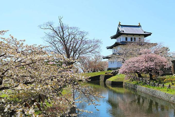 Lịch hoa anh đào nở vào tháng 5 ở Hokkaido