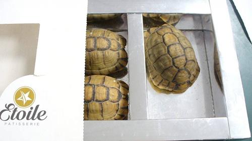 Hành khách ngụy trang rùa quý thành bánh ngọt đem lên máy bay - ảnh 1