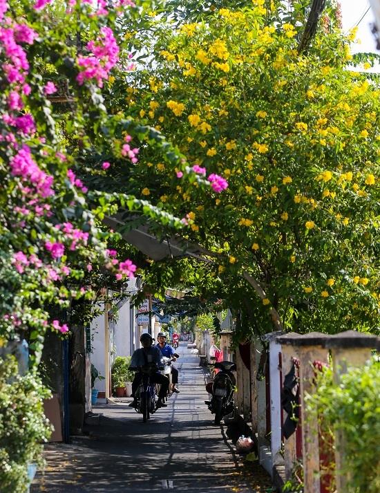 Hoa huỳnh liên nở vàng rực bên đường tàu ở Sài Gòn
