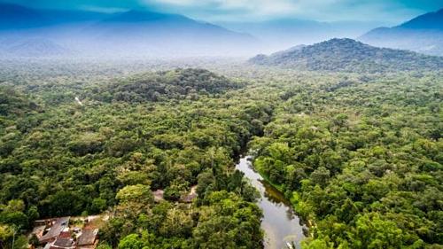 Rừng mưa Amazon có diện tích hơn 5,5 triệu km2. Ảnh: News.