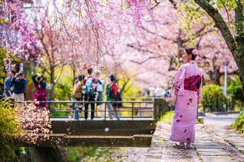 Từ cuối tháng 3 tới tháng 4là thời điểm lý tưởng để chiêm ngưỡng mùa hoa anh đào Nhật Bản. Ảnh:Twitter.