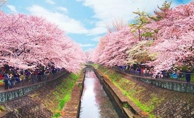 Những nơi ngắm hoa anh đào ít người biết ở Nhật Bản