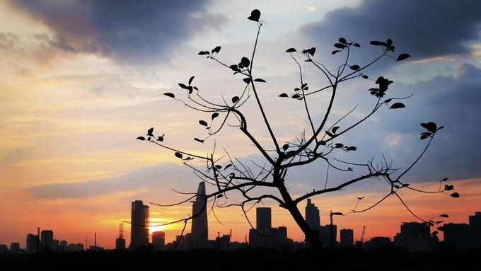 Cảnh đẹp 'cây cô đơn' dọc chiều dài Việt Nam