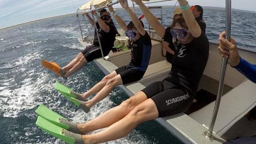 Nữ du khách mặt đối mặt dưới lòng biển xem cá mập ăn trưa