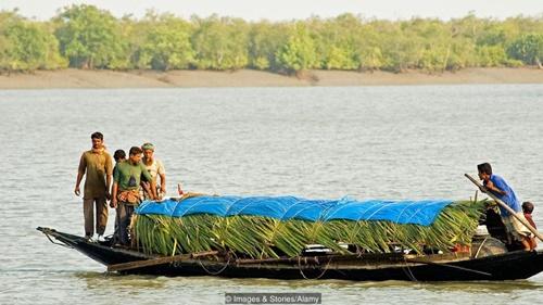 Sự tham lam của dân làng khiến tài nguyên rừng bị mai một và đe dọa môi trường sống của loài hổ. (BBC)