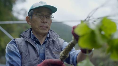 Khi trồng wasabi, ông Iidavà không dùng phân bón hóa học hay thuốc sâu vì muốn bảo vệ môi trường. Ảnh: The Atlantic.