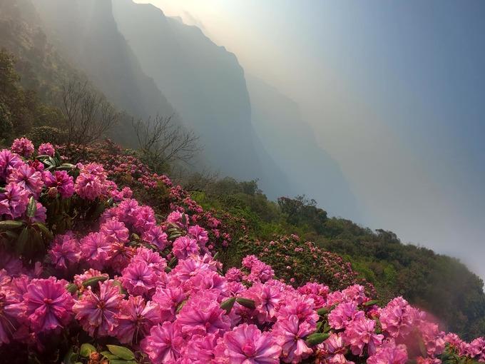 Hai ngày leo núi Tả Liên ngắm hoa đỗ quyên