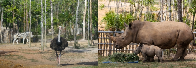 Môi trường sống xanh của động vật quý hiếm tại khu bảo tồn ở Phú Quốc
