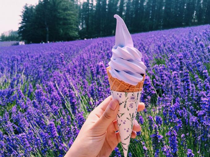 Những trang trại hoa oải hương nổi tiếng ở Nhật Bản