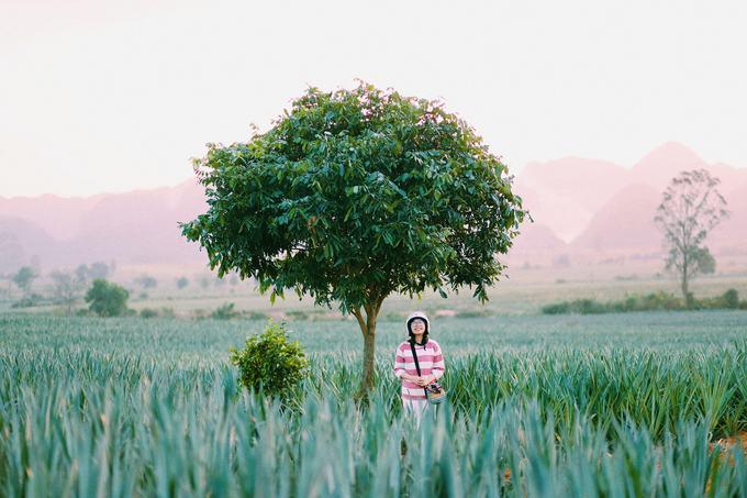 Cánh đồng dứa hút giới trẻ check-in ở Ninh Bình