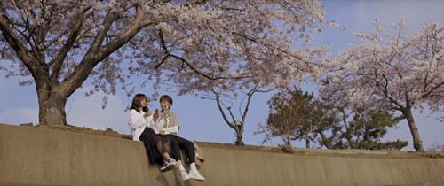 Jeju cũng là một trong những điểm đến ngắm hoa anh đào nổi tiếng tại Hàn Quốc. Nơi đâyluôn xuất hiện thật bình yên và trong trẻo trên mọi khung hình, có lẽ đó là lý do mà Jeju được nhiều ca sĩ Việt lựa chọn để quay MV. Ảnh chụp màn hình.