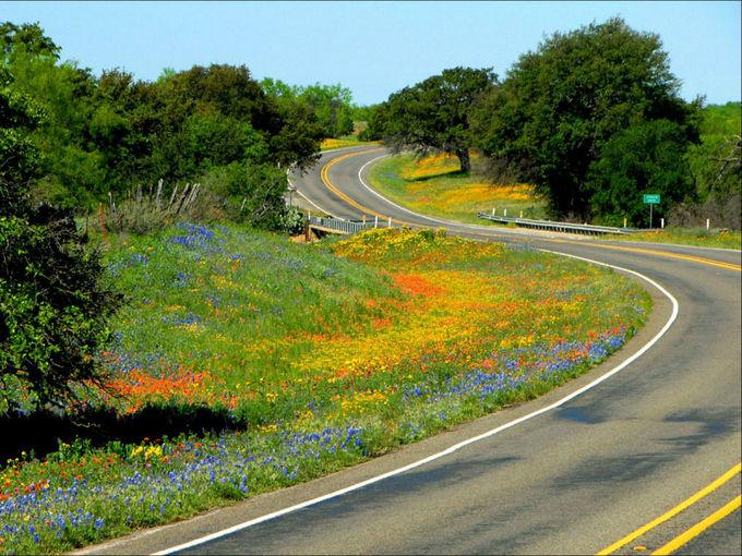 Mùa hoa dại ở Mỹ nở rộ nhất 10 năm