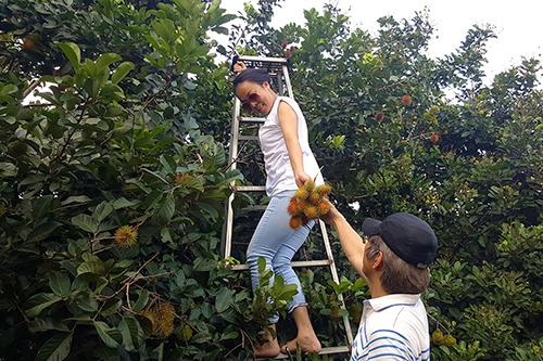 5 vườn trái cây gần TP HCM cho chuyến đi trong ngày