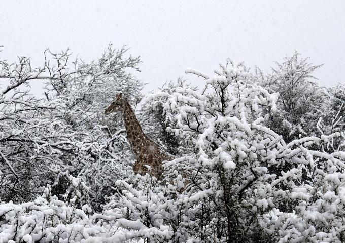 'Mùa hè tuyết rơi' ở các quốc gia nam bán cầu