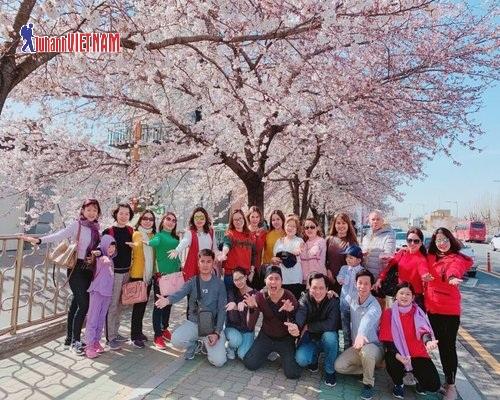 Đoàn khách du lịch Hàn Quốc mùa hoa anh đào.