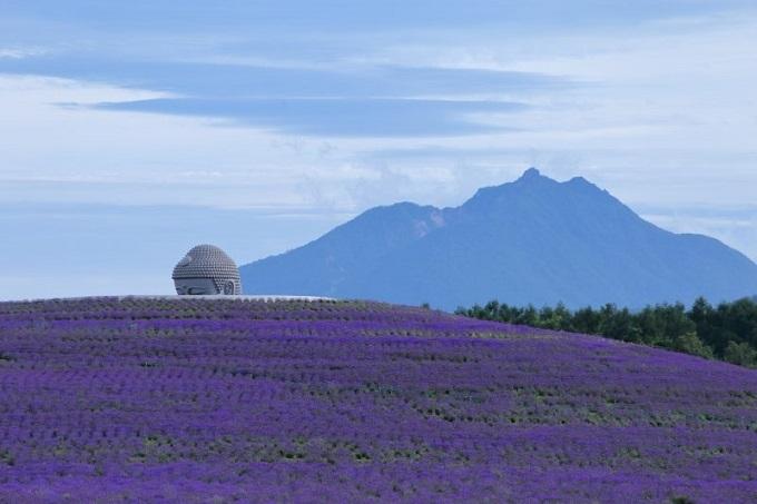 Tượng phật khổng lồ nằm giữa đồi hoa oải hương Nhật Bản