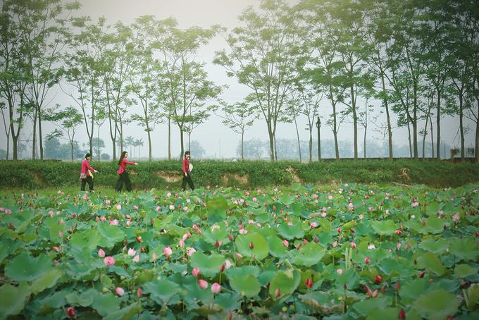 Các đầm sen xứ Nghệ giữ chân thiếu nữ giữa trời hè