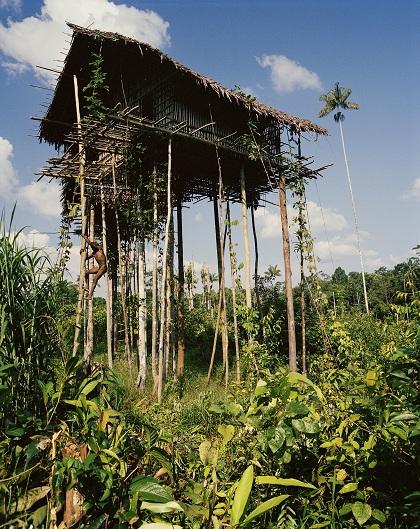 Những ngôi nhà trên cây được xây dựng cao từ 6-25 m, thậm chí là cao tới 50 m trong thời điểm xung đột giữa các bộ tộc. Ảnh: Frederic Lagrange.