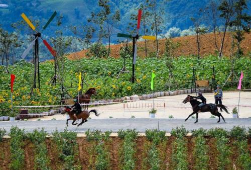 Lý do du khách yêu thích giải đua ngựa tại Fansipan - ảnh 1