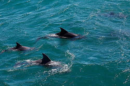 Vịnh Jervis (New South Wales), nơi có các tảng đá ở dưới nước là hang động sinh sống của các loài cá và các sinh vật biển khác. Bên cạnh đó, nơi đây còn có cỏ biển, cá heo, hải cẩu và cá voi mũi chai... những sinh vật bạn luôn mong muốn xuất hiện trong chuyến lặn của mình. Ảnh: Pinterest.