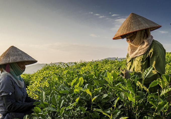 Những điểm đến đẹp ở vùng 'đệ nhất danh trà' Thái Nguyên