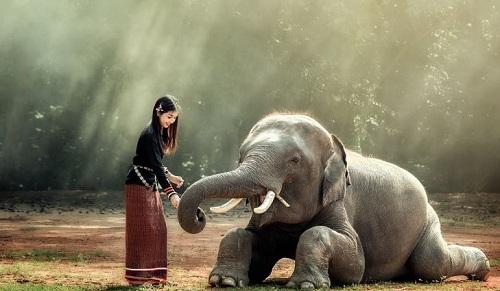 Voi là loài động vật tượng trưng cho sức mạnh, tuổi thọ ở Thái Lan. Ảnh: World Atlas.
