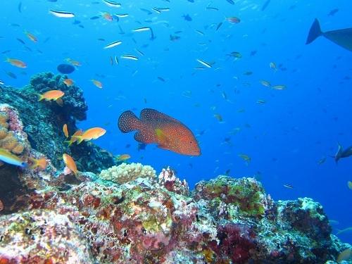 Lặn biển với ống thở là một hoạt động thu hút khách du lịch ở Maldives. Ảnh: Dive Report.