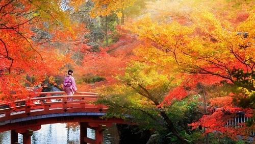 Mùa thu ở Nhật Bản rực rỡ với sắc đỏ, vàng của cây cối. Ảnh: The Senior.