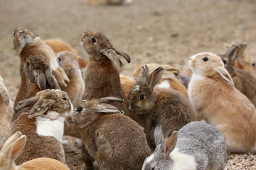 Những con thỏ ở đây thường lẽo đẽo đi theo khách. Mỗi năm, trung bình đảo Thỏ đón hơn 100.000 khách. Ảnh: All that interesting.