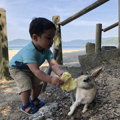 Du khách có thể cho thỏ ăn rau, cà rốt... mua ở trong các siêu thị trước khi lên đảo. Ảnh: Twitter.