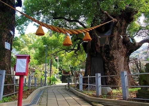 Những cây xanh sống sót qua trận bom nguyên tử Hiroshima - ảnh 2