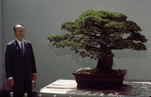 Ông Masaru Yamaki đến thăm cây thông trắng vào năm 1979. Ảnh: U.S. National Arboretum.
