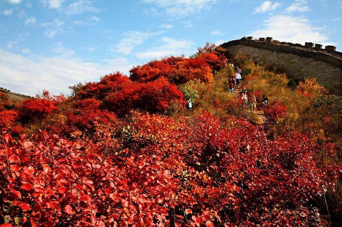 5 khu rừng lá vàng, đỏ nổi tiếng ở Trung Quốc