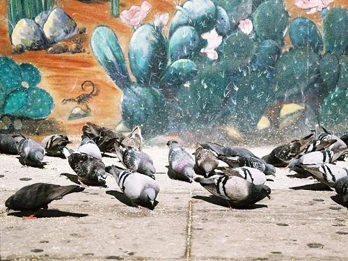 Việc cho chim bồ câu ăn có thể dẫn đến mất vệ sinh môi trường là lây lan bệnh dịch. Ảnh: Business Insider.