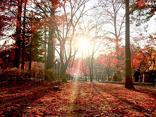 Seoul (Hàn Quốc): Đâychắc chắn sẽ là điểm du lịch không thể bỏ qua với các tín đồ du lịch xứ sở kim chi. Tuy nhiên để có thể du lịch Seoul bạn cần có visa multiple Hàn Quốc (visa nhập cảnh nhiều lần) hoặc bạn phải chuẩn bị từ khá sớm cho việc xin visa. Khi đến vào Hàn Quốc vào mùa thu (kéo dài từ tháng 9 tới tháng 11) du khách sẽ có cơ hội chiêm ngưỡng nhiều cảnh đẹp lãng mạn đắm say lòng người tại đảo Nami hay ngắm vẻ cổ kính vào thu của cung điện Gyeongbokgung hay trải nghiệm các trò chơi cảm giác mạnh tại công viên giải trí Everland. Ảnh: Blog bnhero.
