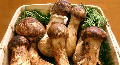 Nấm MatsutakeĐất nước mặt trời mọc là quê hương của nhiều loại nấm ngon, được du khách yêu thích, một trong số đó là matsutake. Loại nấm này đặc biệt ở chỗ chỉ xuất hiện vào mùa thu, mọc trên rễ của cây thông. Matsutake nổi tiếng với hương vị độc đáo, có thể ăn nướng, hấp cùng cơm hoặc nấu thành súp.
