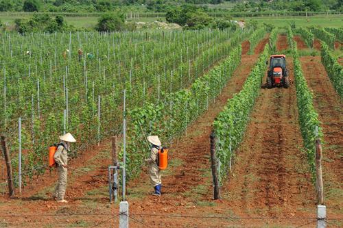 Hầm rượu vang lớn nhất Việt Nam - ảnh 3