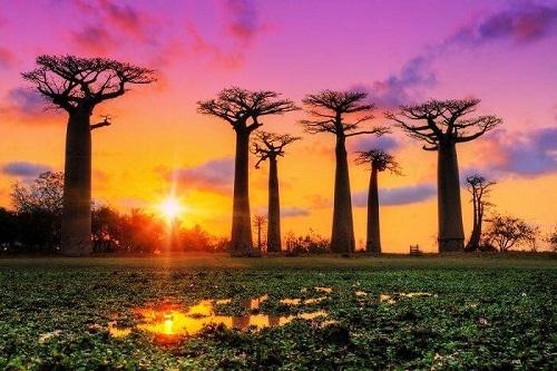 Những điều ít biết về Madagascar - ảnh 3