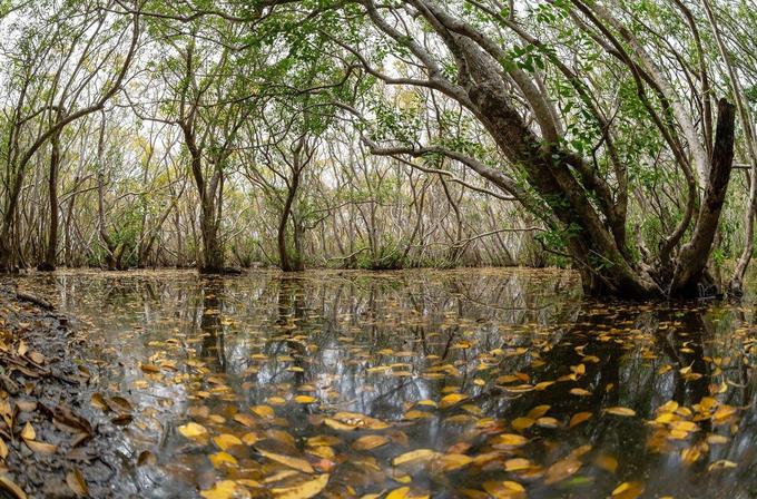 Nét thu trong rừng Rú Chá