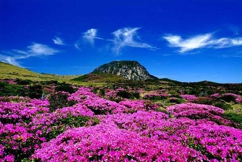 Nhờ đất bazan, thảm thực vật ở ngọn núi phát triển tươi tốt quanh năm. Ảnh: Asia Society.