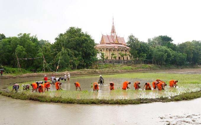 Hội đua bò của đồng bào Khmer