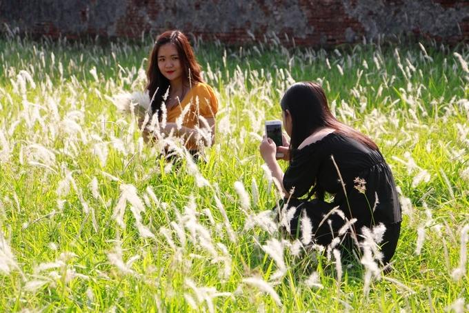 Du khách tấp nập chụp ảnh với cỏ tranh ở Đại Nội Huế