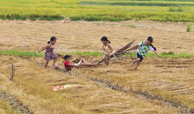 Khung cảnh đồng quê ở Quảng Ngãi